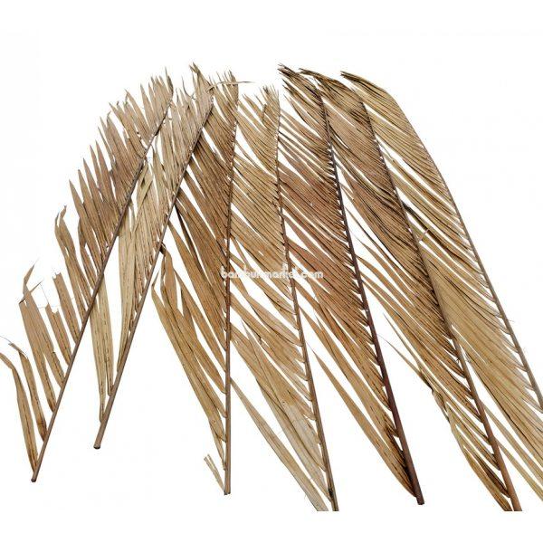 Кокосовый лист